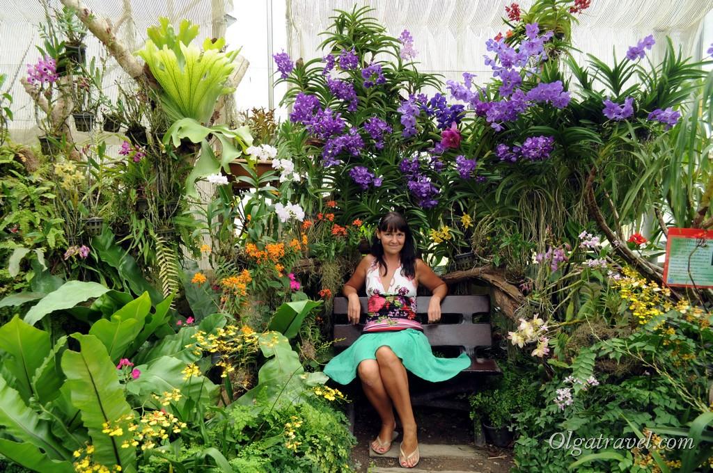 Queen Sirikit Botanic garden 32