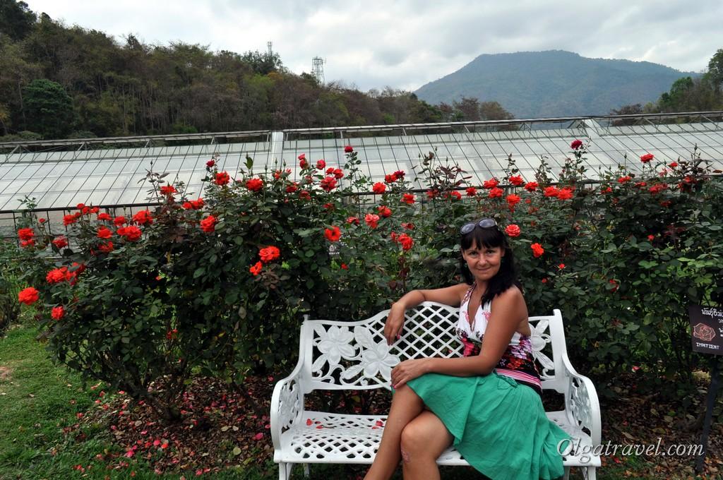 Queen Sirikit Botanic garden 38