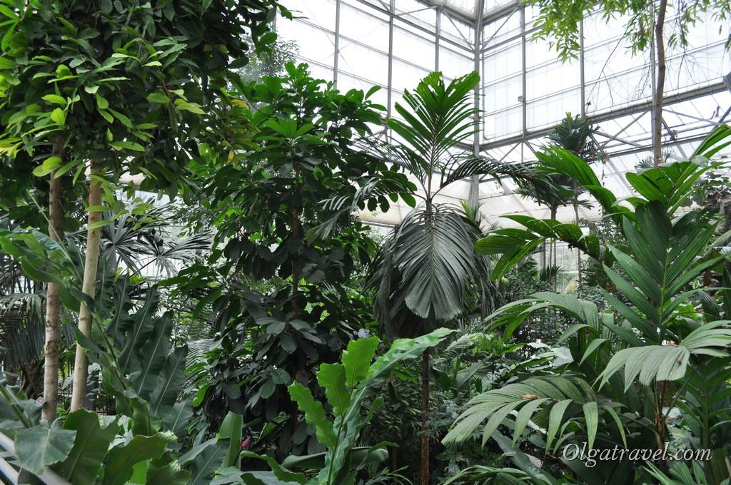 Queen Sirikit Botanic garden 43