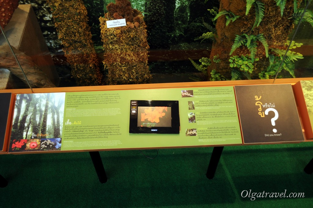 Queen Sirikit Botanic garden 48