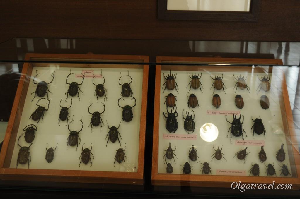 Queen Sirikit Botanic garden 51