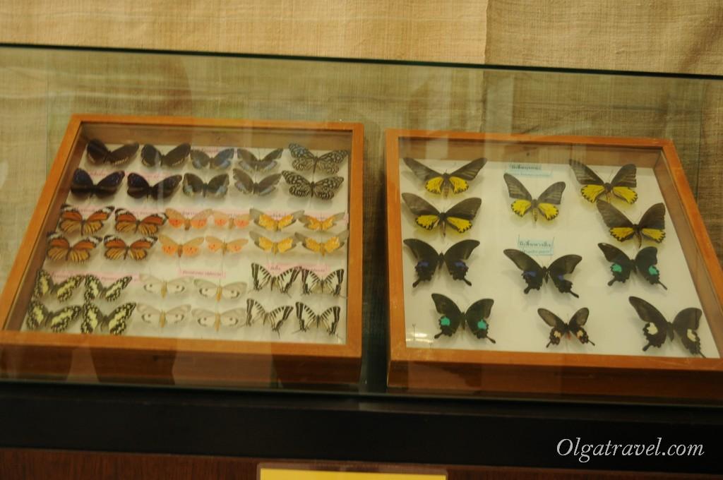 Queen Sirikit Botanic garden 52