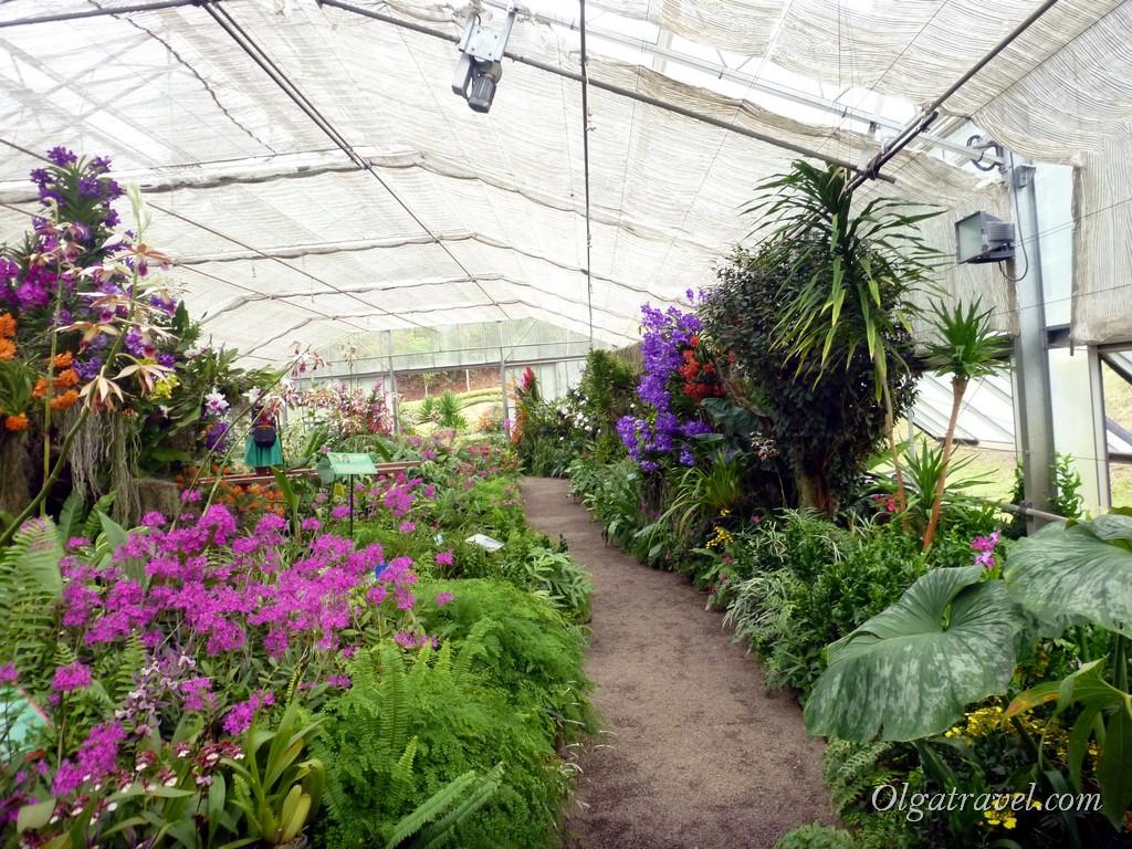 Queen Sirikit Botanic garden 56