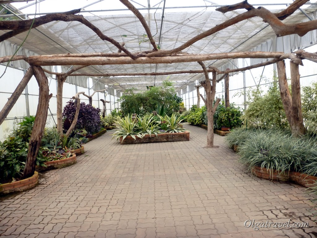 Queen Sirikit Botanic garden 57
