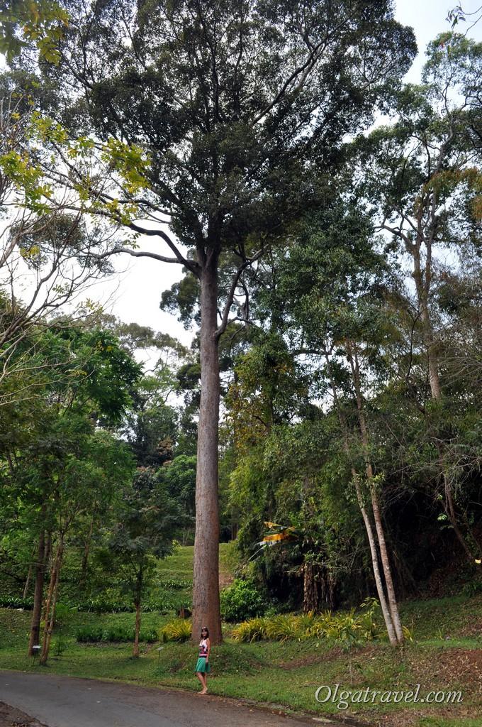Queen Sirikit Botanic garden 6