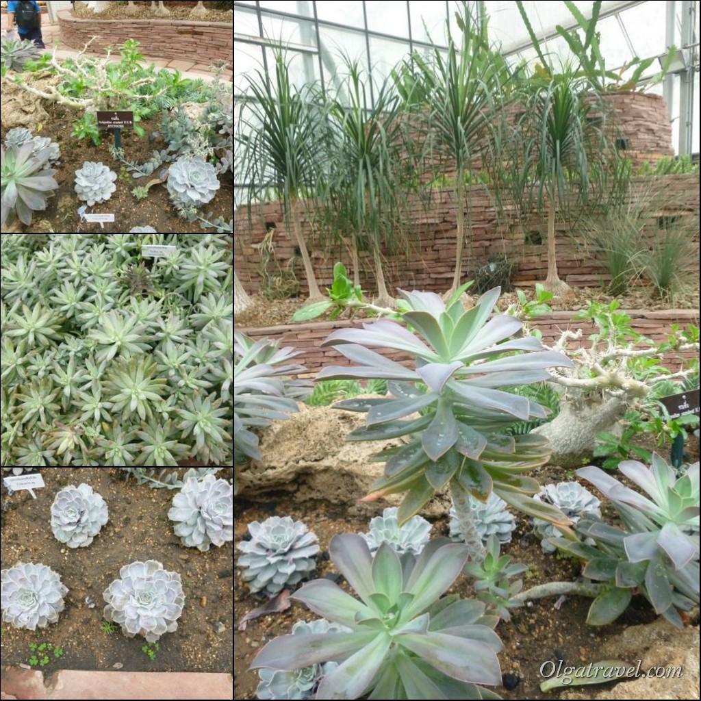 Queen Sirikit Botanic garden 61