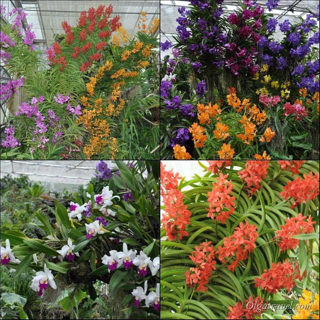 Queen Sirikit Botanic garden 66