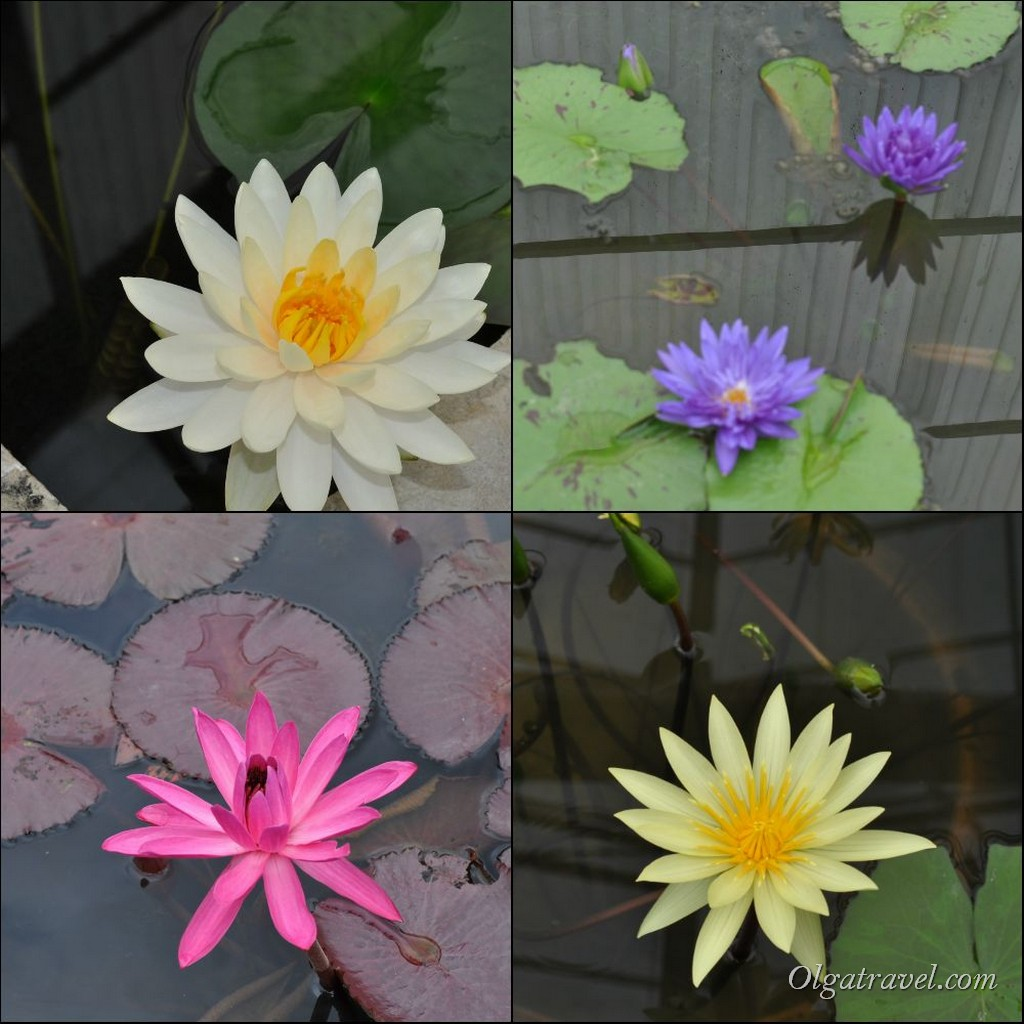 Queen Sirikit Botanic garden 67