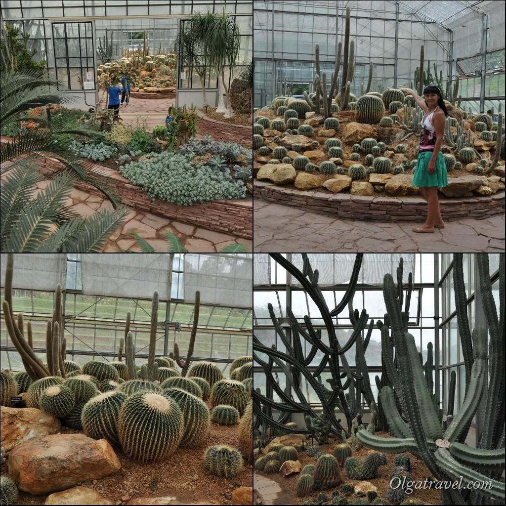 Queen Sirikit Botanic garden 68