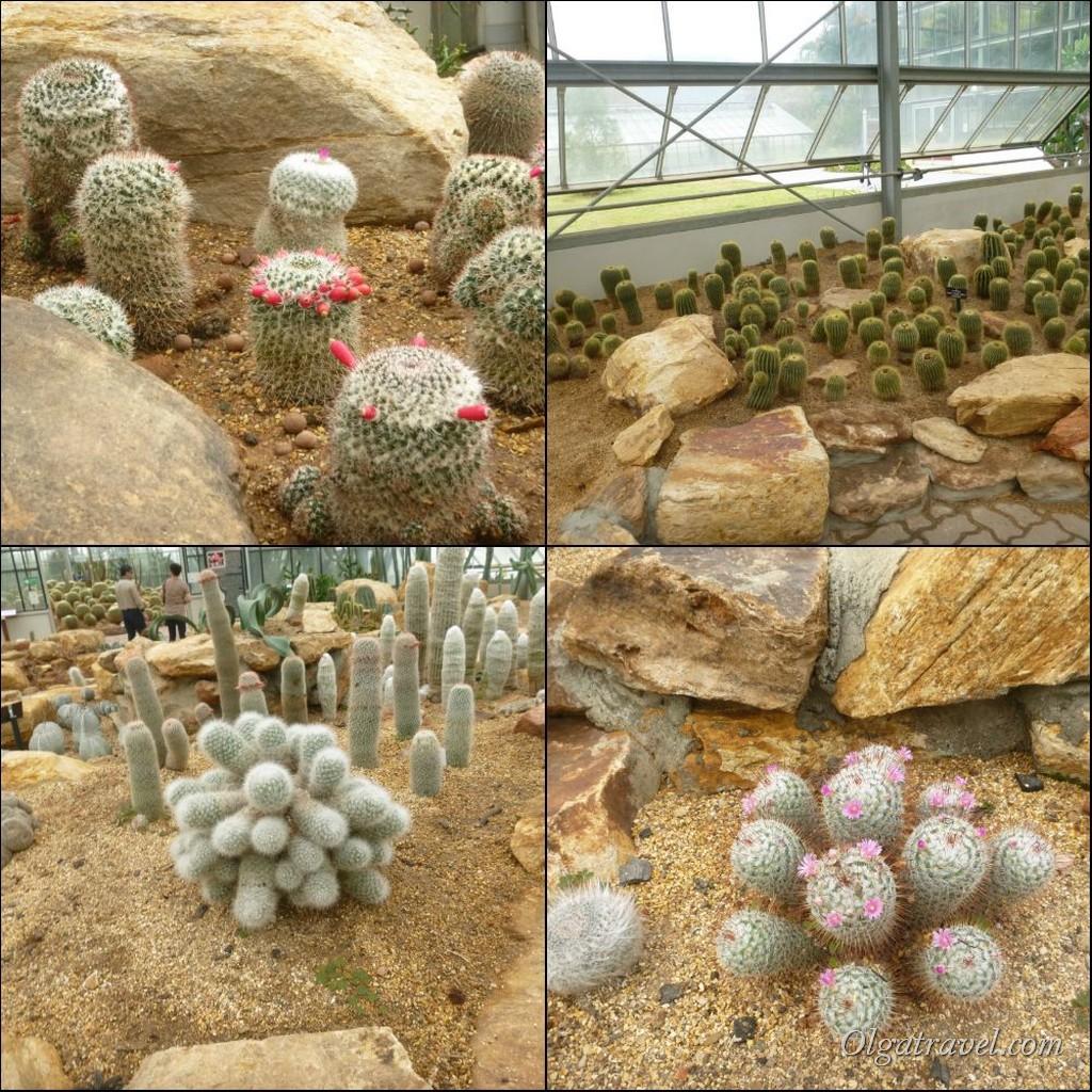Queen Sirikit Botanic garden 69