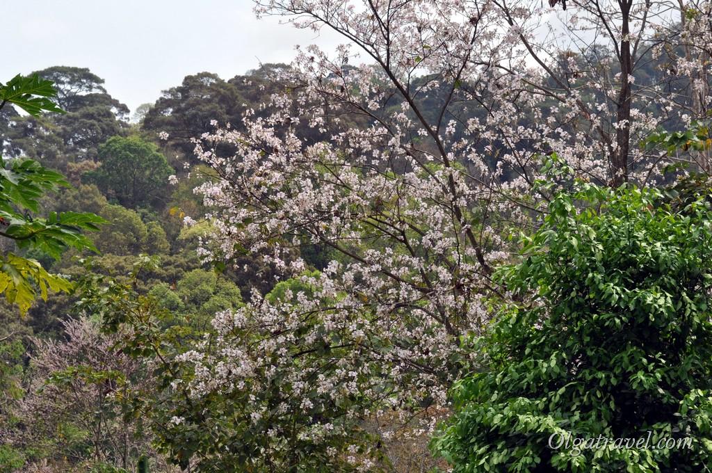 Queen Sirikit Botanic garden 8