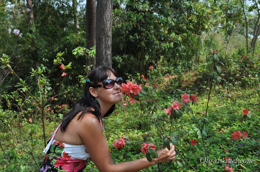Queen Sirikit Botanic garden 9
