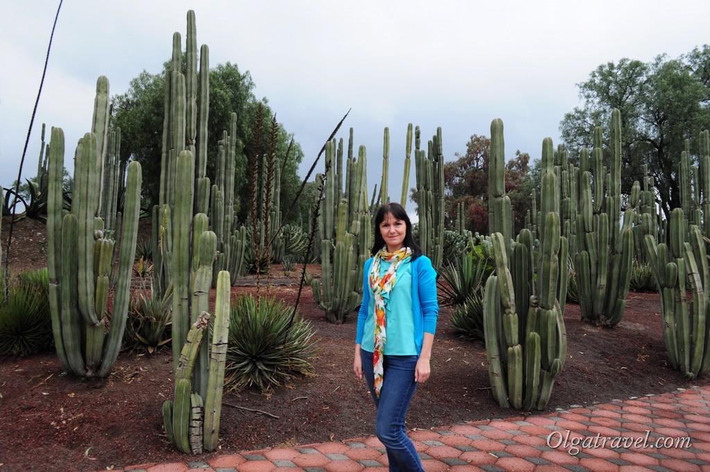 кактусы Мехико Теотиуакан