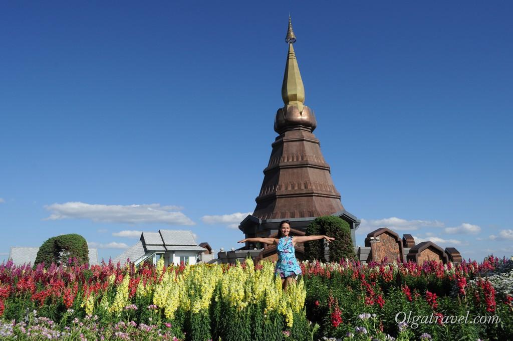 Королевские Чедди почти на самой вершине горы Дой Интханон