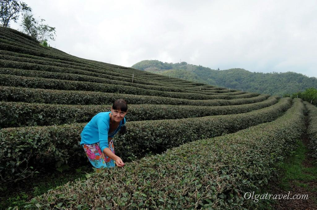 Прогулки по чайным плантациям Мае Салонг