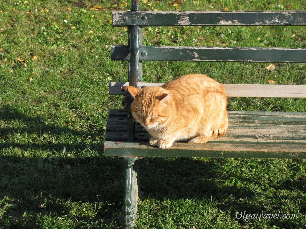 Здесь, в первом дворе дворца Топкапы, на декабрьском солнышке греется рыжий котик :)
