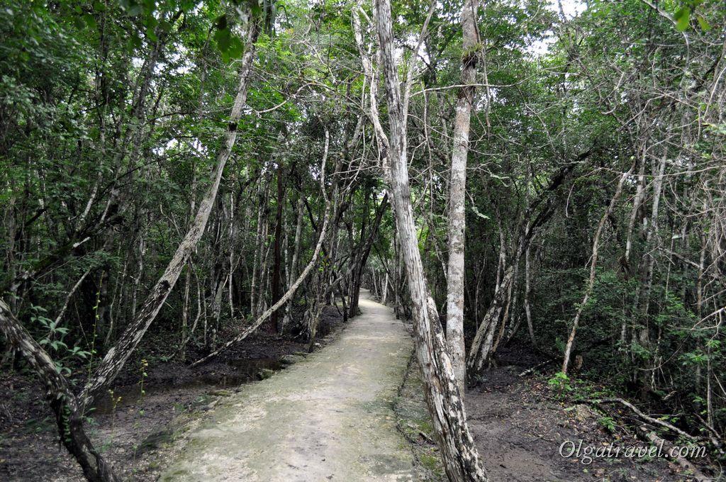 Археологический комплекс Чиканна расположен в джунглях штата Кампече