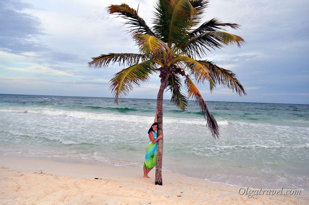 Пальма возле самой воды с которой все фотографируются