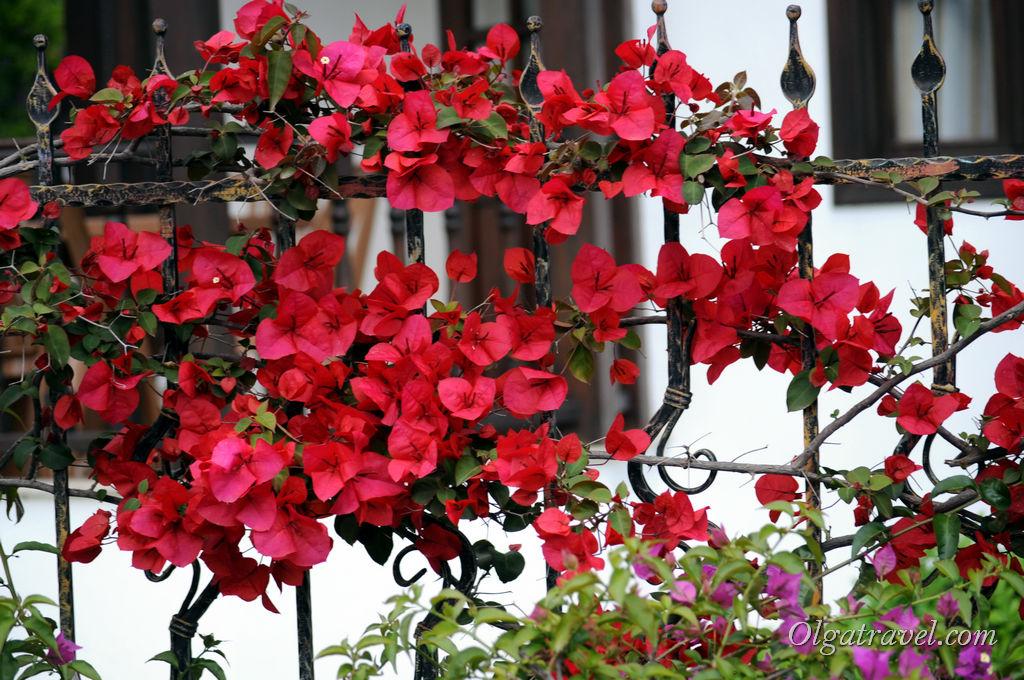 В Турции очень много цветов, особенно весной!