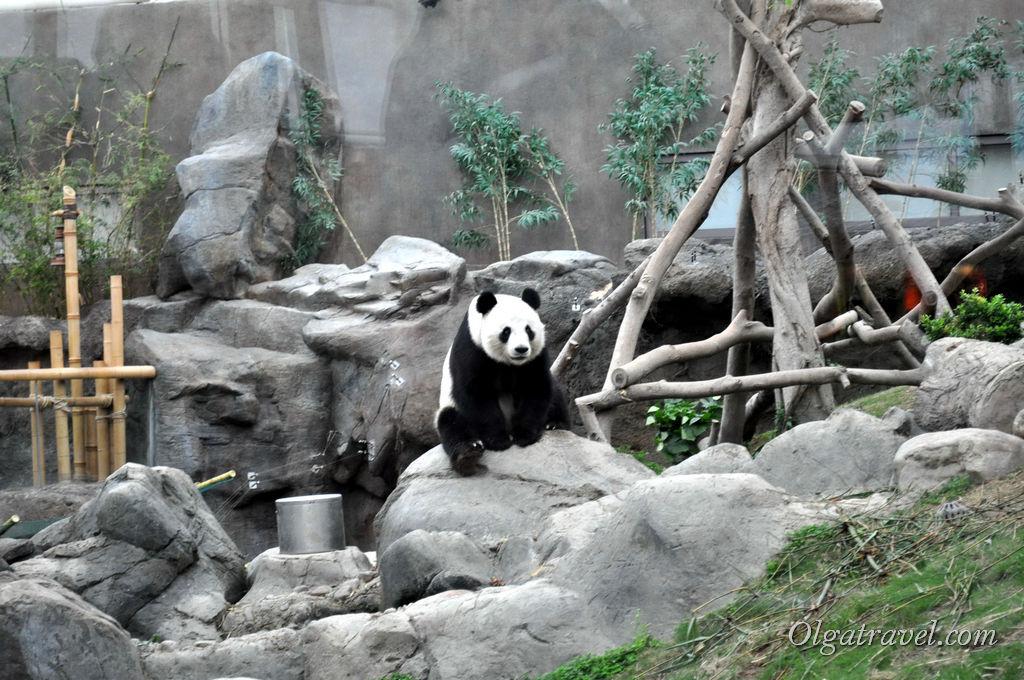 панда Гонконг