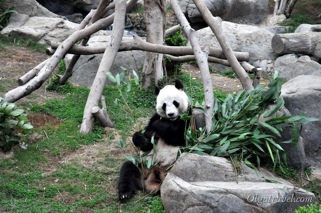 Оушен парк панда