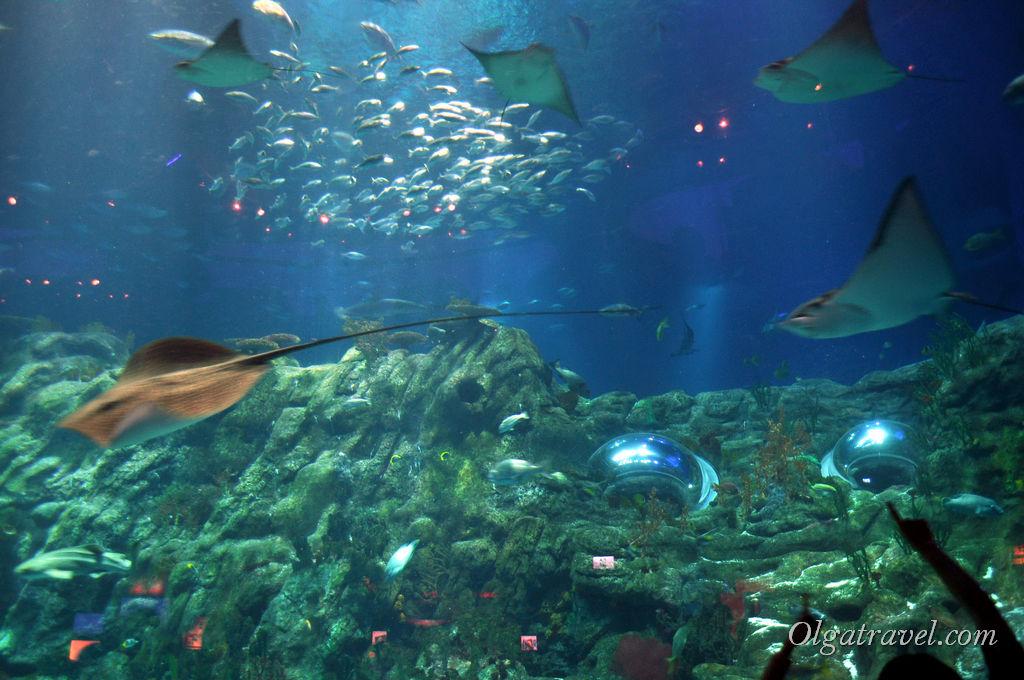 Ocean Park_Hongkong_6