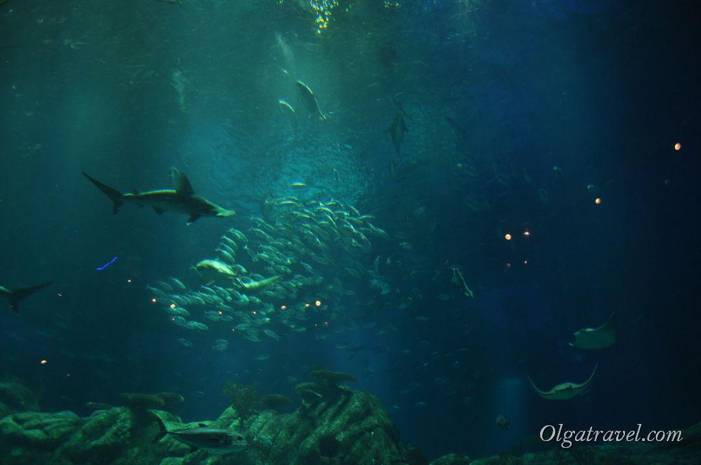 Ocean Park_Hongkong_7