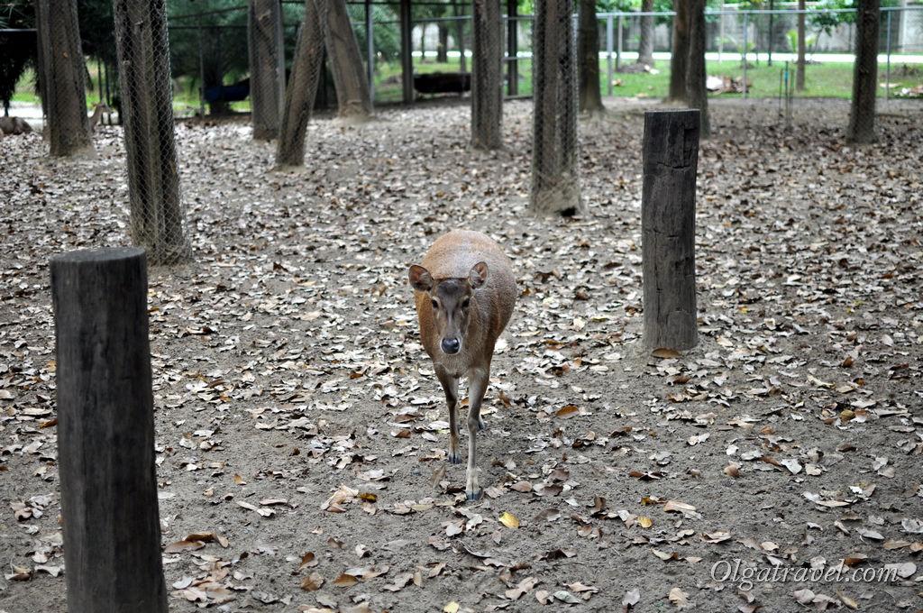 Вот такие звери живут в парке