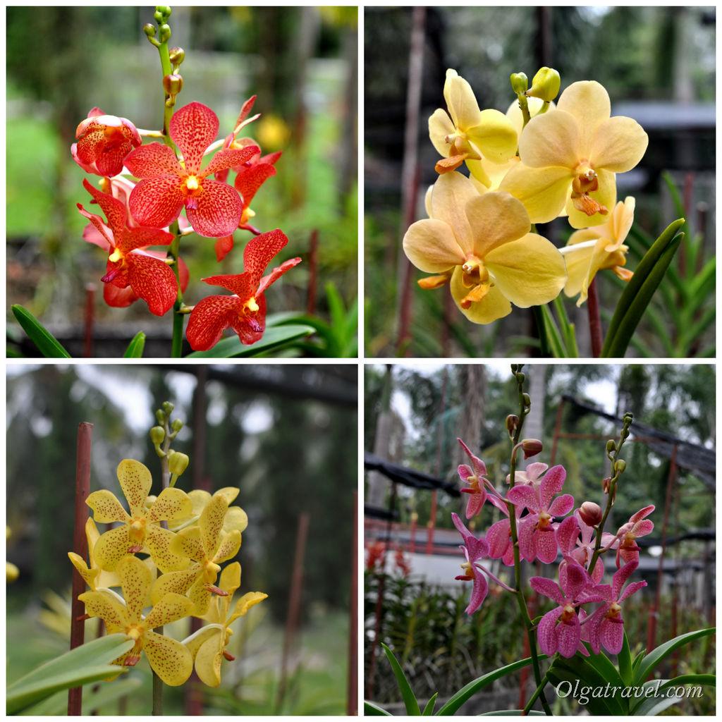 Botanical_Garden_Horizon_Village_53