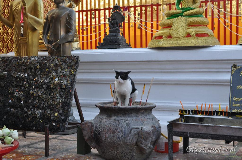 Как думаете, что делает этот котик в урне со священными свечками ? :)