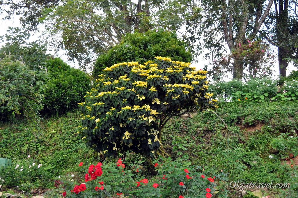 Chiang_Mai_Bhubing_palace_17