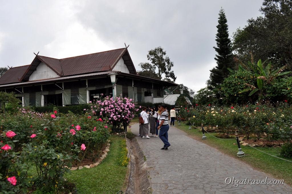 В королевской резиденции очень много роз. Но и людей хватает. Не дают нормально кусты сфотографировать :)