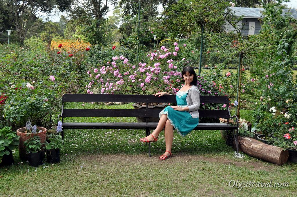 Когда устали прогуливаться по парку можно отдохнуть, вдыхая сладкий аромат роз