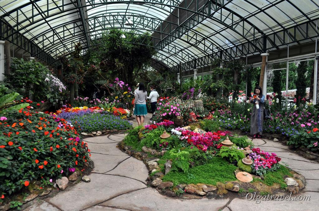 Оранжерея с орхидеями и другими неизвестными цветочками