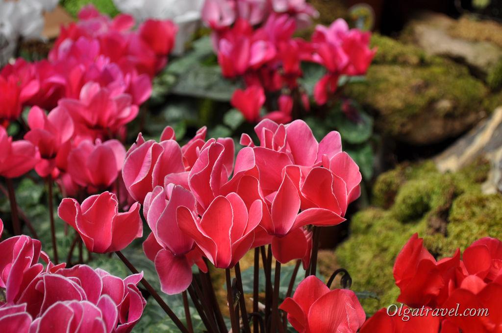 Неопознанные цветы