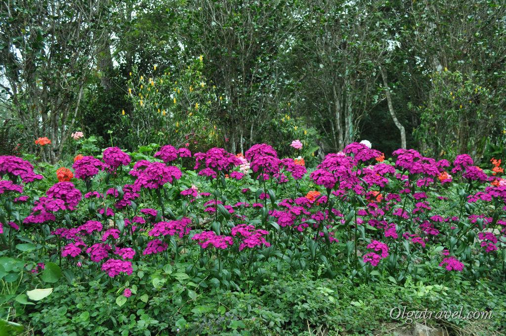 Рядом с резиденцией цветочные поляны :)