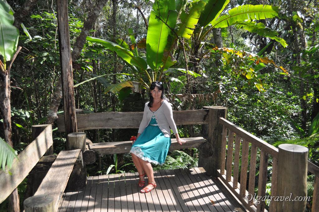 Сквозь джунгли и папоротниковый сад все выше и выше :)