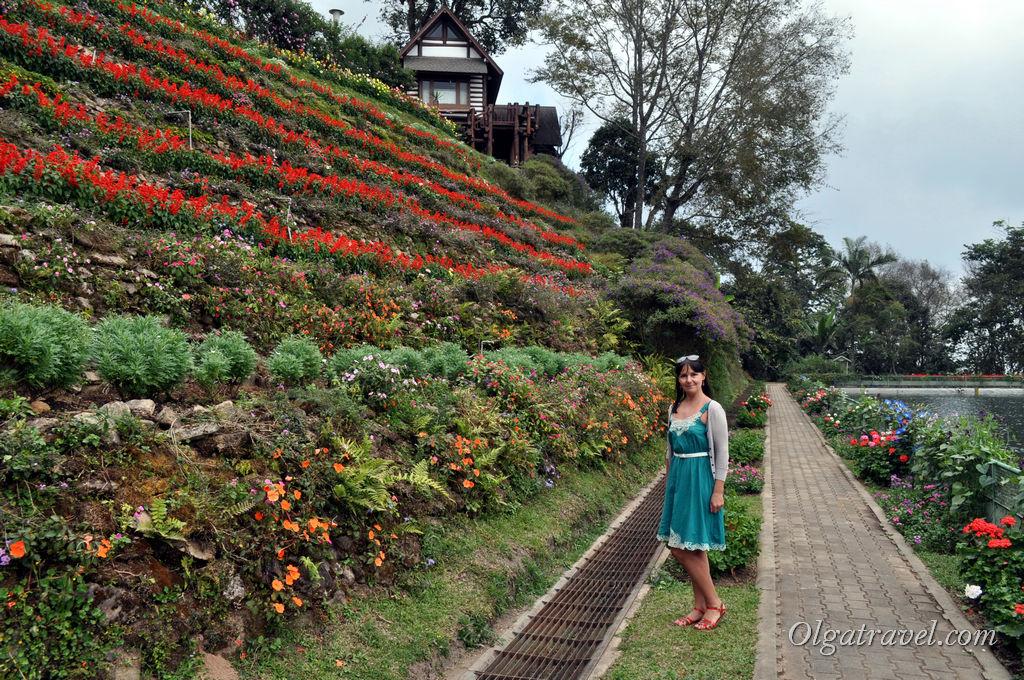 Цветы возле резервуара с водой