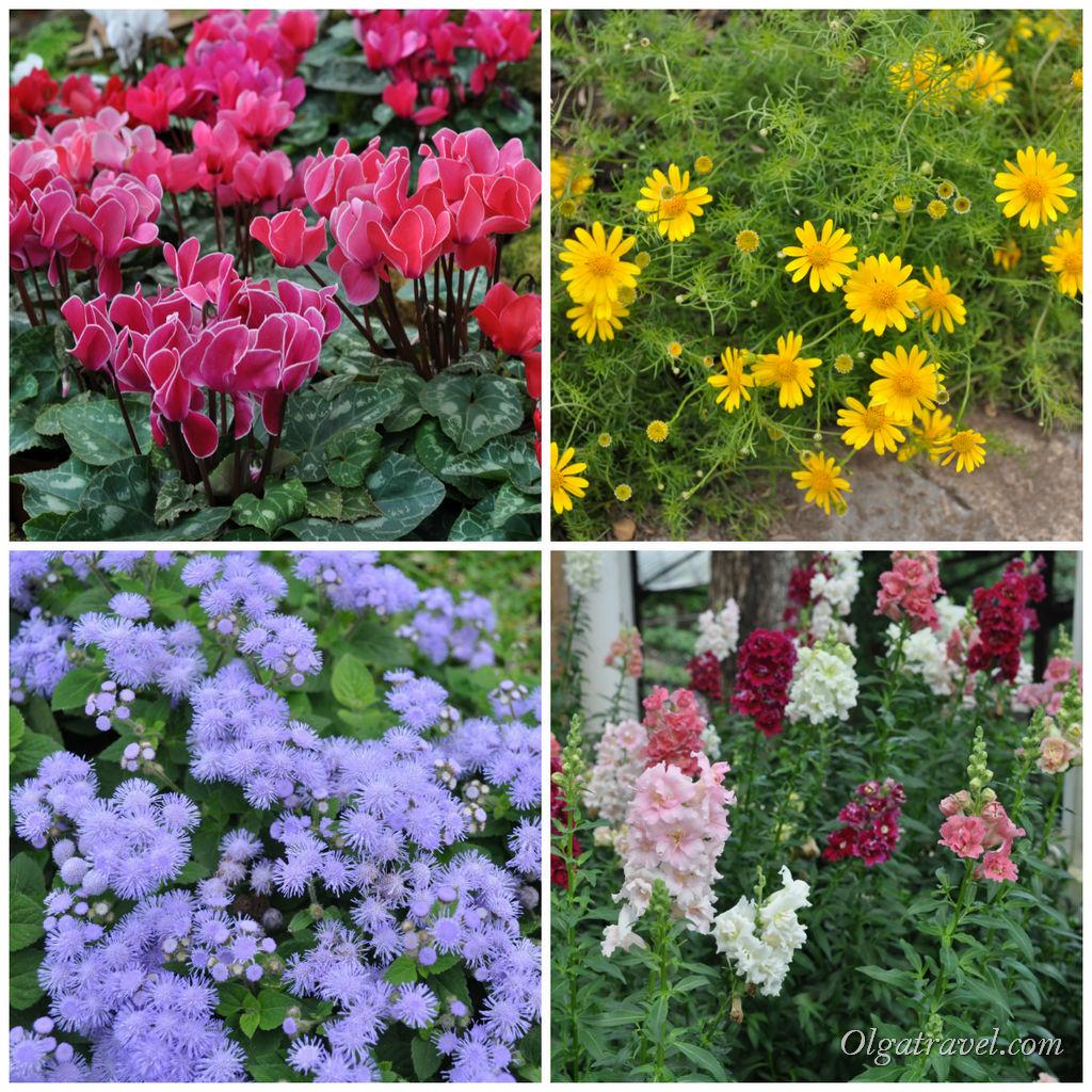 Нетипичные для Таиланда цветы