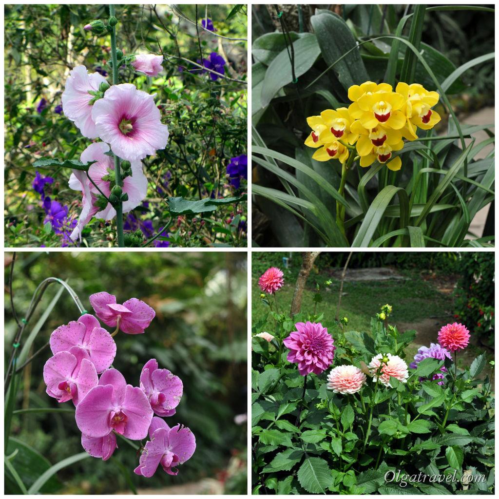 И еще цветы