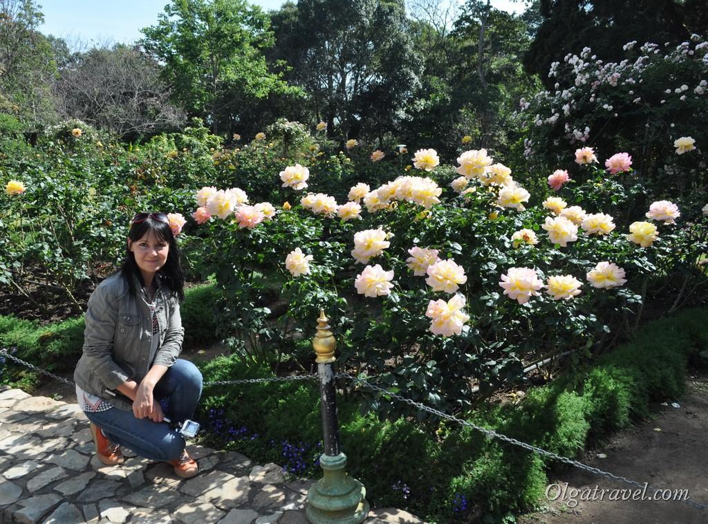 Розы-мутанты и я :)