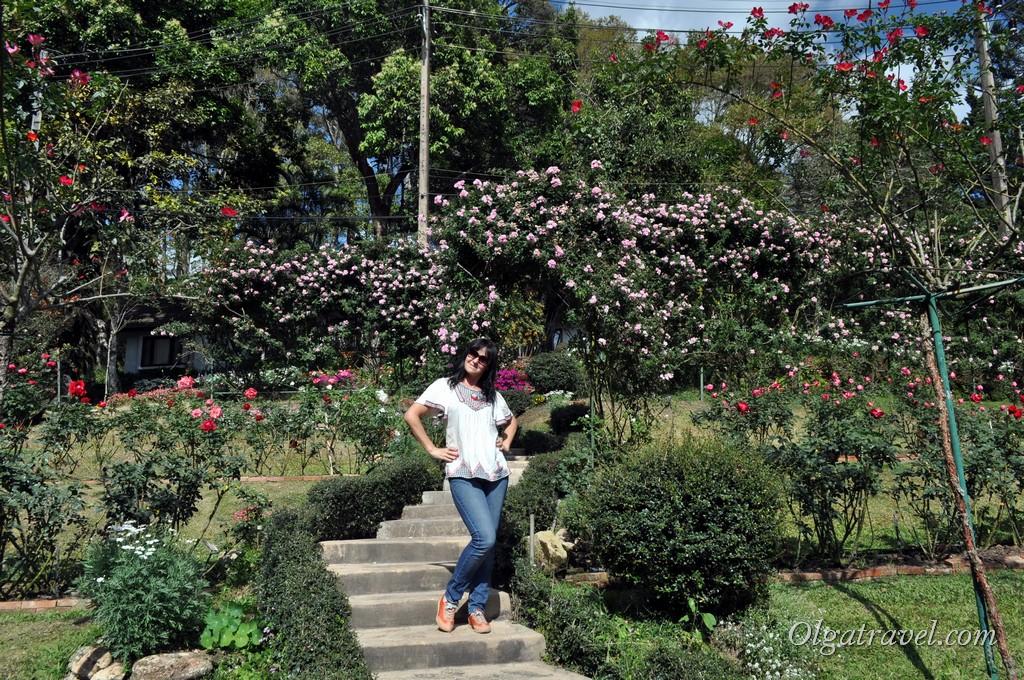 Chiang_Mai_Bhubing_palace_83