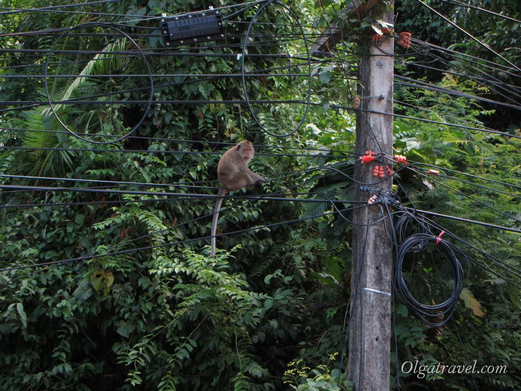 ко чанг обезьяны