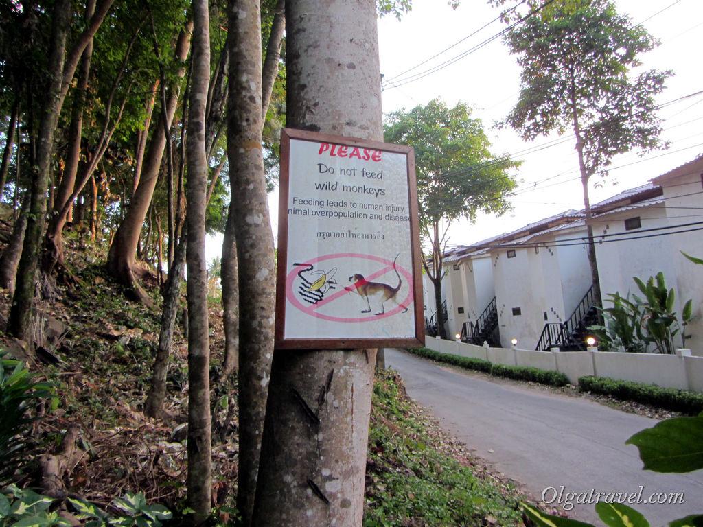 Пожалуйста, не кормите обезьян на Ко Чанге!