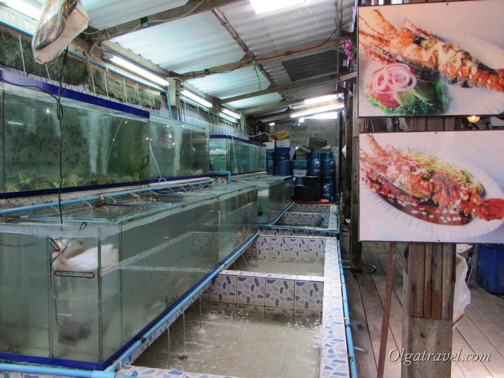 Всякая морская живность плавает в аквариумах