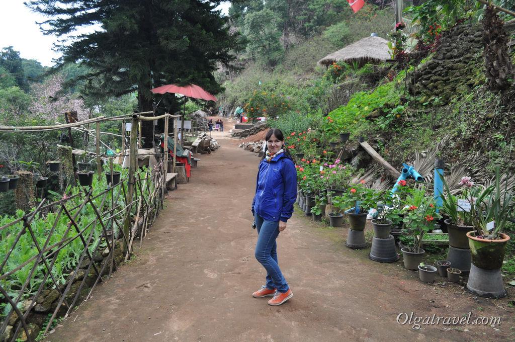 Doi_Pui_Hmong_Village_12