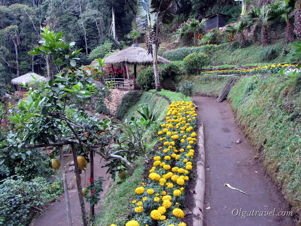 Doi_Pui_Hmong_Village_4
