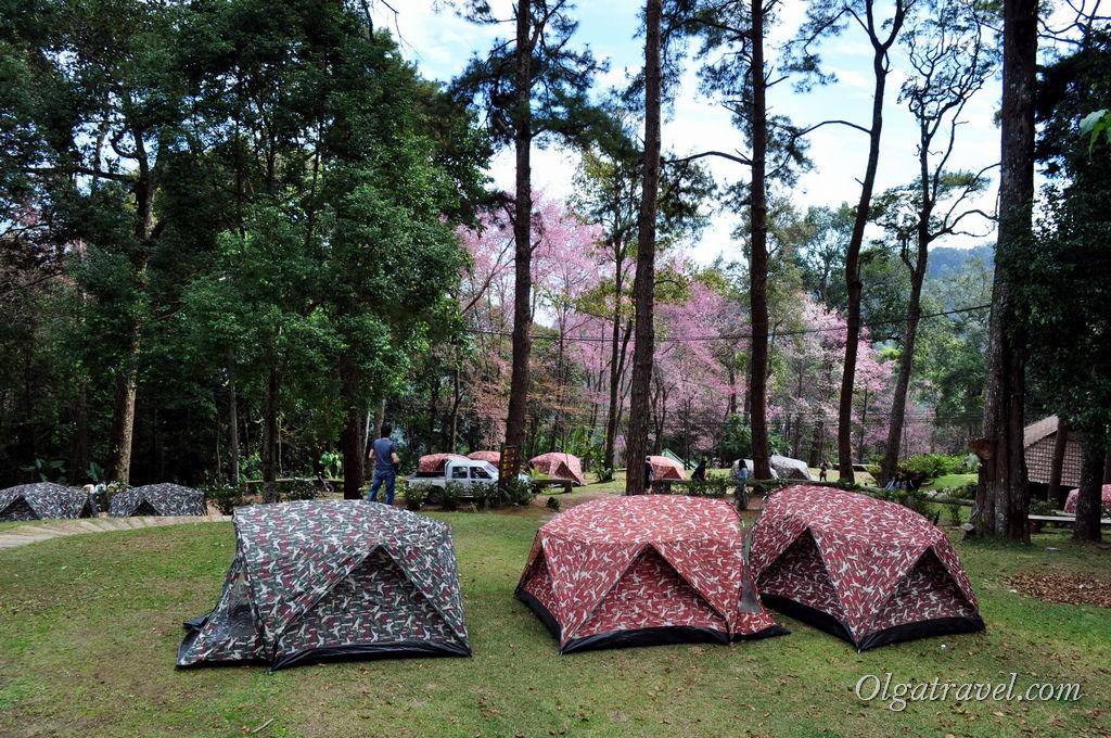Кемпинг на горе Doi Pui