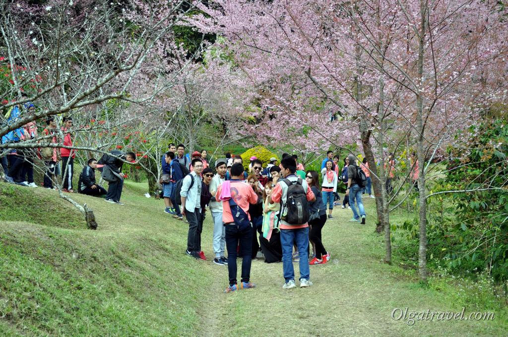 На гору привезли толпу студентов и школьников