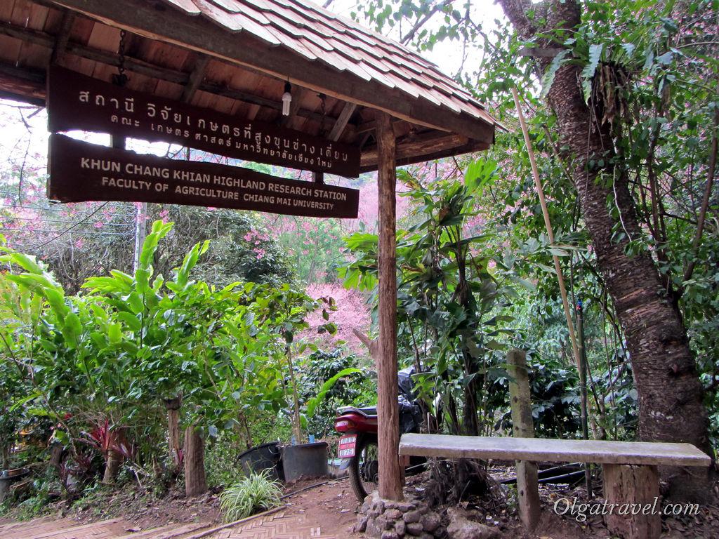 Добро пожаловать на исследовательскую станцию аграрного факультета Чианг майского университета